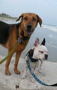 folly_beach_dog_rules